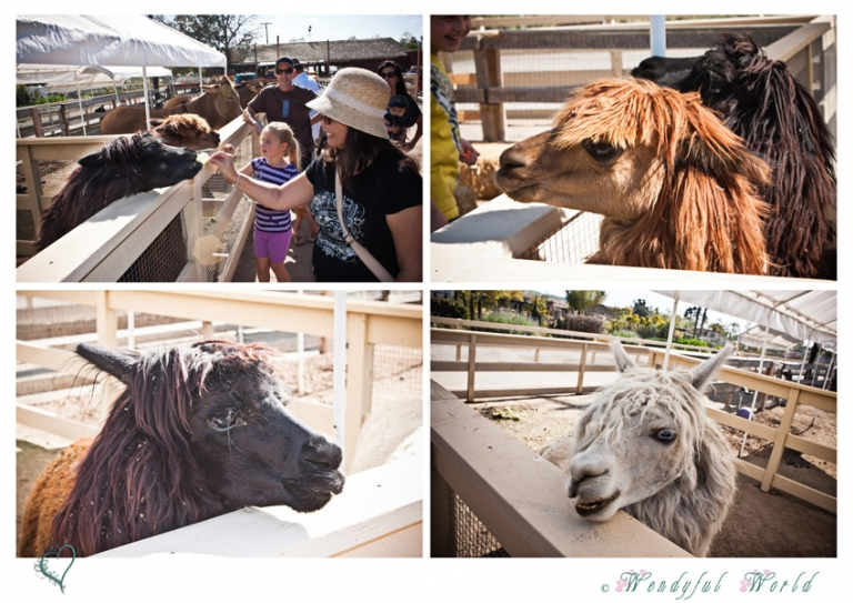 Zoomars Petting Zoo At San Juan Capistrano Wendyfulworld